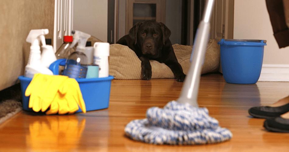 7 Adımda Kolay Temizlik Fikirleri
